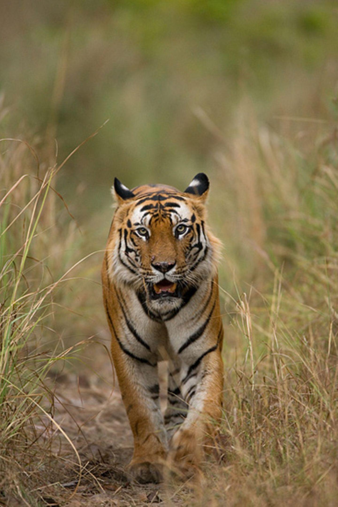 Fotogalerie: Die Augen des Dschungels - Bild 2