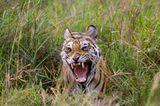 Fotogalerie: Die Augen des Dschungels - Bild 4