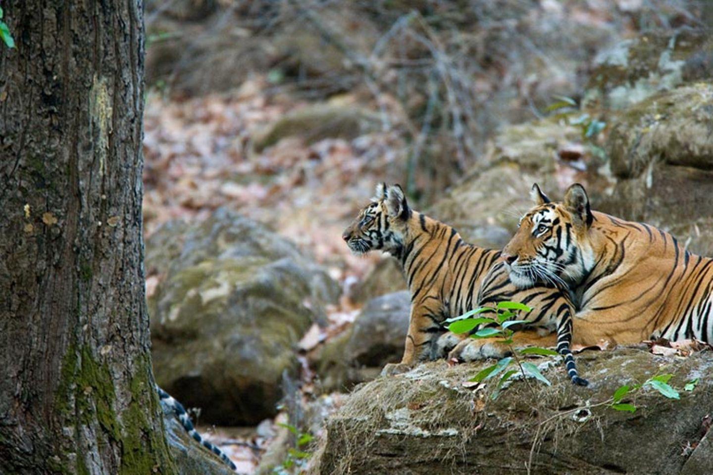 Fotogalerie: Die Augen des Dschungels - Bild 5