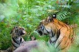 Fotogalerie: Die Augen des Dschungels - Bild 7