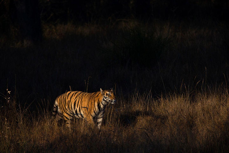 Fotogalerie: Die Augen des Dschungels - Bild 9