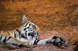 Fotogalerie: Die Augen des Dschungels - Bild 10