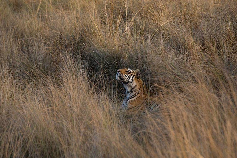 Fotogalerie: Die Augen des Dschungels - Bild 11