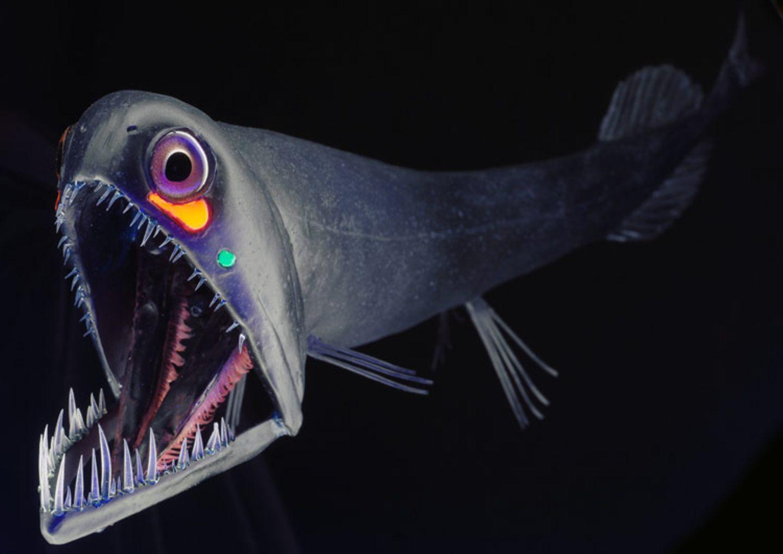 Fotoshow: Kreaturen der Tiefe - Bild 2