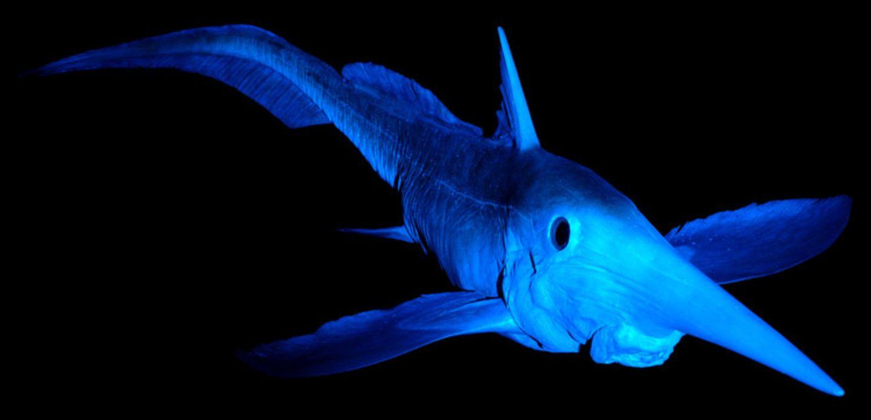 Fotoshow: Kreaturen der Tiefe - Bild 5
