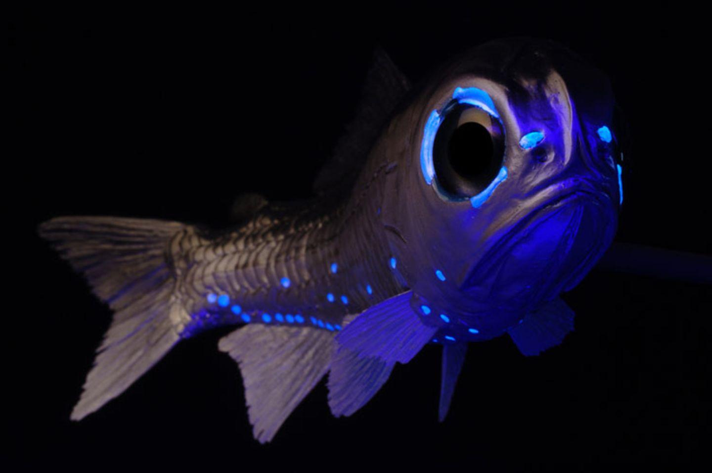 Fotoshow: Kreaturen der Tiefe - Bild 6