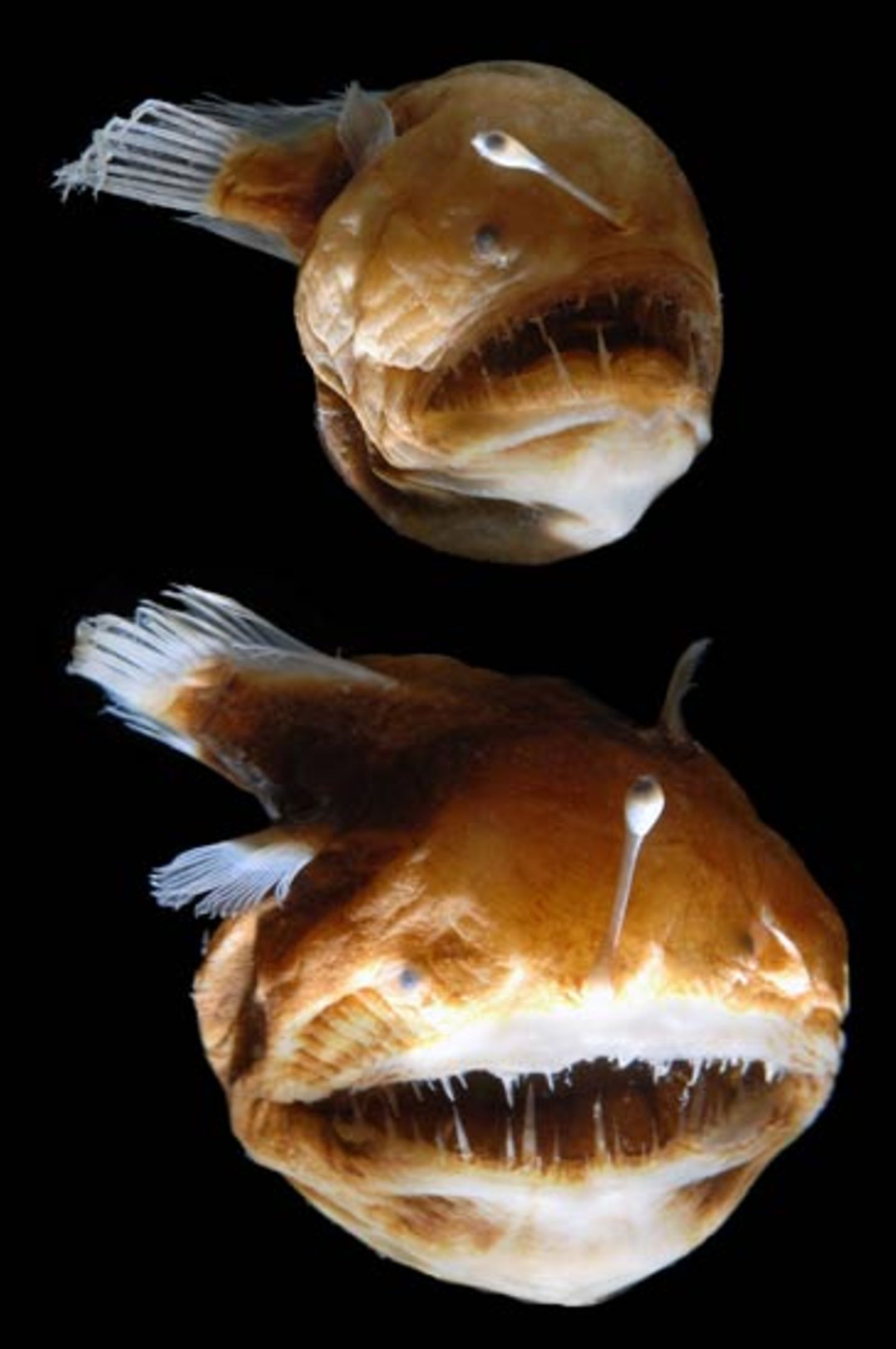 Fotoshow: Kreaturen der Tiefe - Bild 9