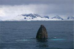 Antarktis: Unter Segeln zum Südpol - Bild 2