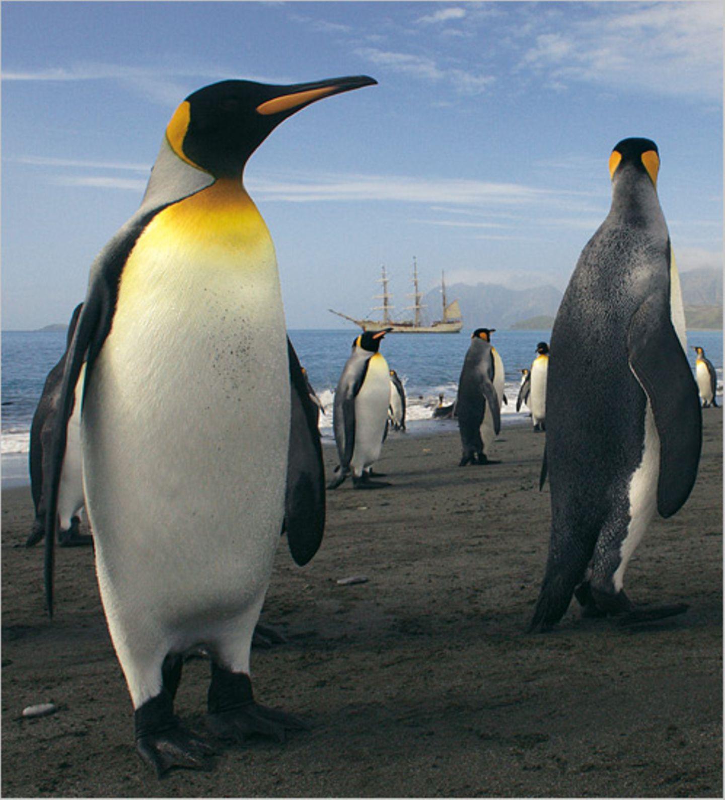 Antarktis: Unter Segeln zum Südpol - Bild 6