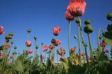 Die besten User-Fotos - März 2009 - Bild 22