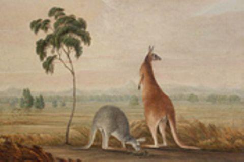 Australien: Bildessay: Im Bann exotischer Schönheit