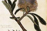 Australien: Bildessay: Im Bann exotischer Schönheit - Bild 2