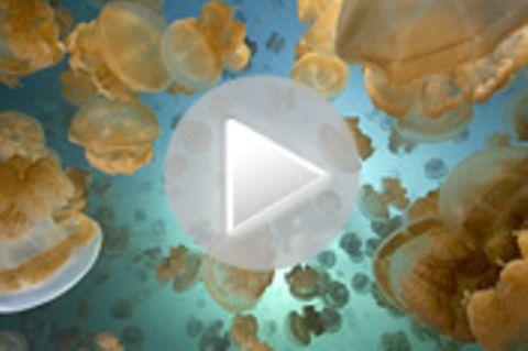 Mirkonesien: Die Unterwasserwelt von Palau