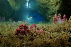 Video: Unterwasserwelt Palau - Bild 2