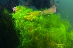 Video: Unterwasserwelt Palau - Bild 4