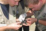 11. GEO-Tag der Artenvielfalt im Wildtierland - Bild 7