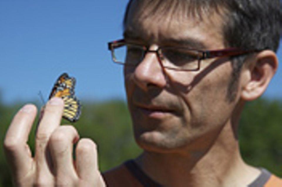 Monarchfalter: Wanderer mit Hightech-Nutzlast