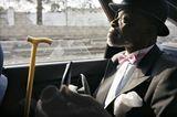 Fotogalerie: Die Sapeurs von Brazzaville - Bild 11