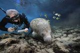 Fotoshow: Florida-Seekühe - Bild 8