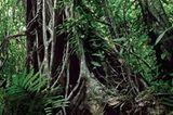 Fotogalerie: Fotogalerie: Wunder Regenwald - Bild 14
