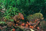 Fotogalerie: Fotogalerie: Wunder Regenwald - Bild 19