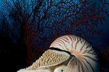 Fotoshow: Nautilus - Bild 3