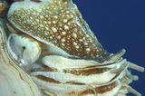 Fotoshow: Nautilus - Bild 4
