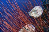 Fotoshow: Nautilus - Bild 5
