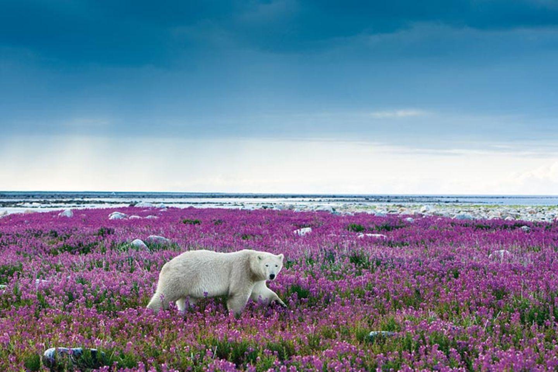 Fotogalerie: Fotogalerie: Arktis und Antarktis