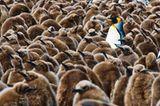Fotogalerie: Fotogalerie: Arktis und Antarktis - Bild 11