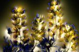 Fotogalerie: Leuchtende Pflanzen - Bild 3