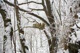 Tierfotografie: Goldstumpfnasen - Bild 6