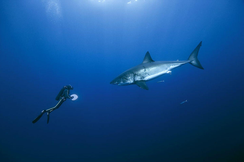 Filmtipp: Unsere Ozeane