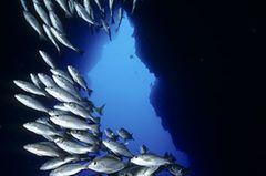 Filmtipp: Unsere Ozeane - Bild 2
