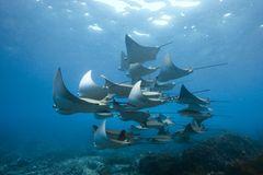 Filmtipp: Unsere Ozeane - Bild 4