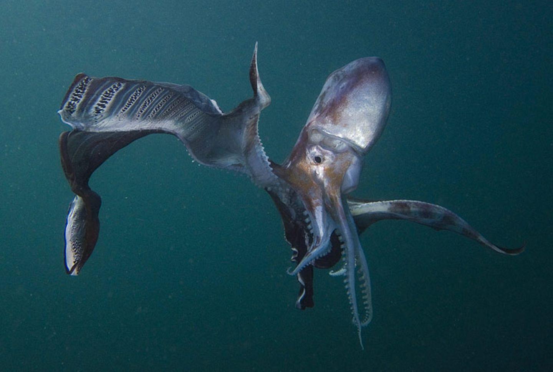 Filmtipp: Unsere Ozeane - Bild 5