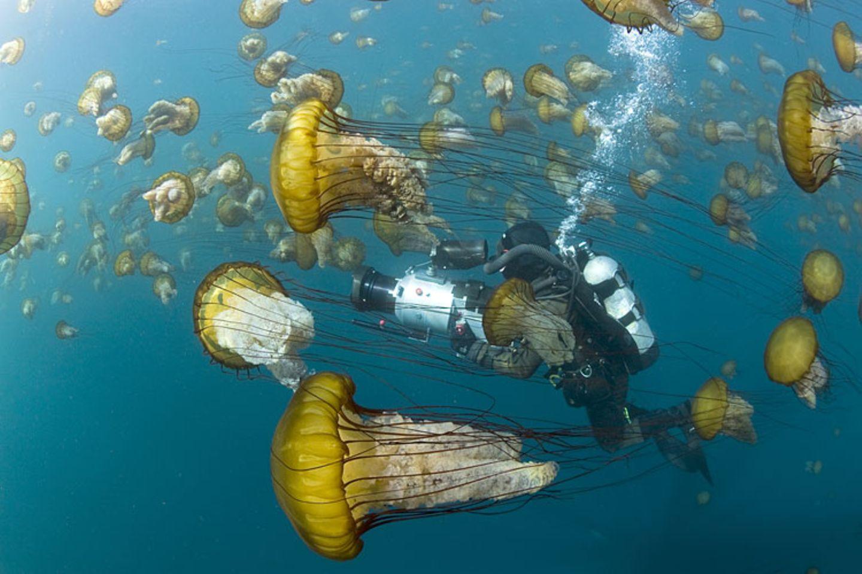 Filmtipp: Unsere Ozeane - Bild 9