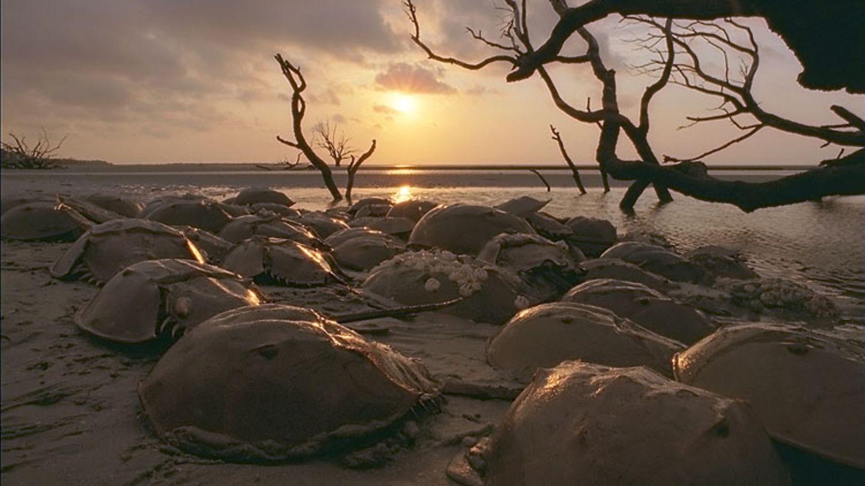Filmtipp: Unsere Ozeane - Bild 12