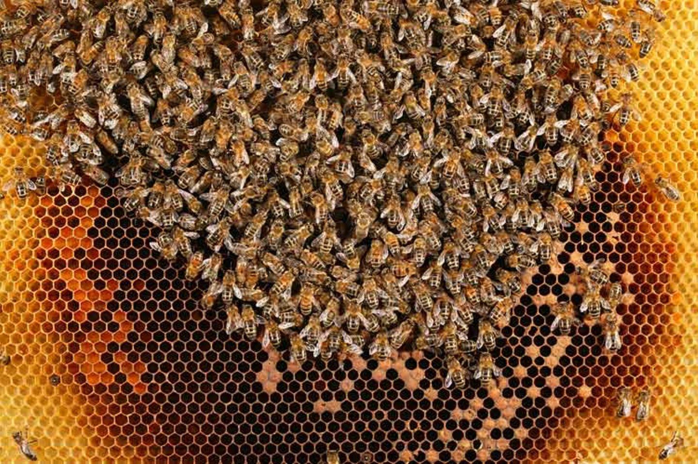 Bienensterben: Ausflug ohne Wiederkehr