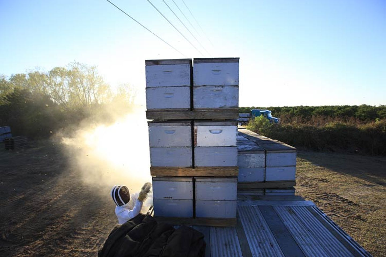 Bienensterben: Ausflug ohne Wiederkehr - Bild 2