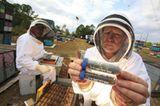 Bienensterben: Ausflug ohne Wiederkehr - Bild 3