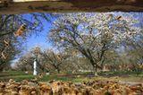 Bienensterben: Ausflug ohne Wiederkehr - Bild 8