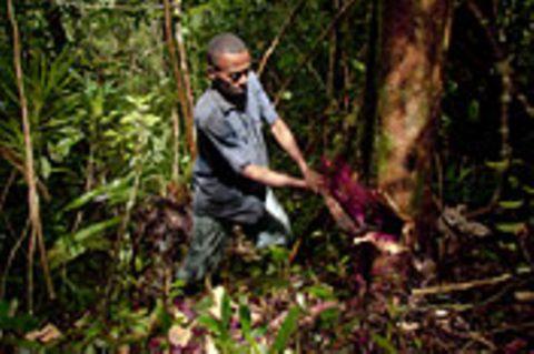 Illegaler Holzhandel: Raubbau am Regenwald