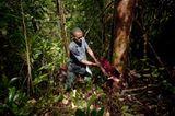 Madagaskar Rosenholz