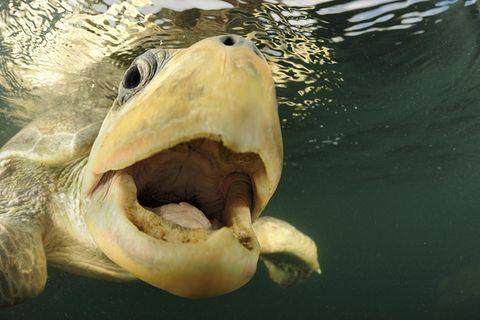 Fotogalerie: Meeresschildkröten