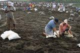 Eiersammeln am Strand von Ostional