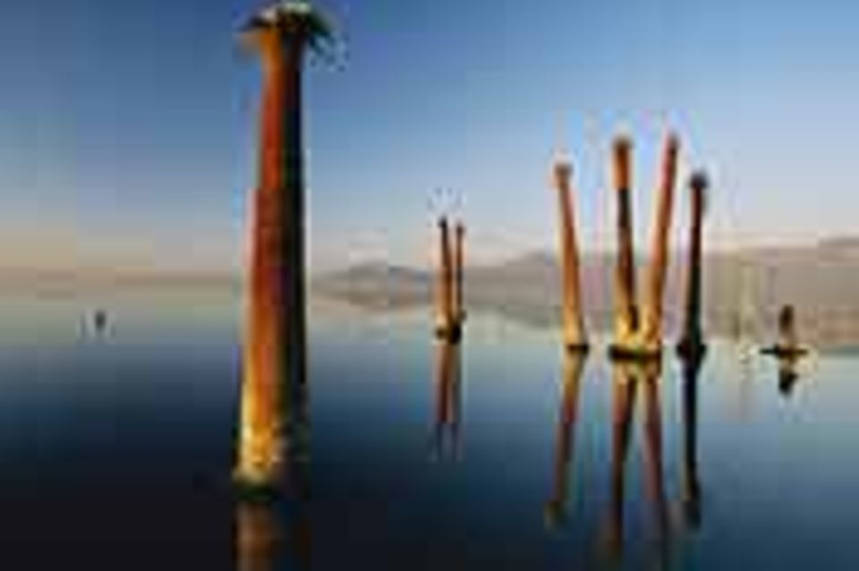 Fotogalerie: Fotogalerie: Internationale Naturfotografie an der Ostsee
