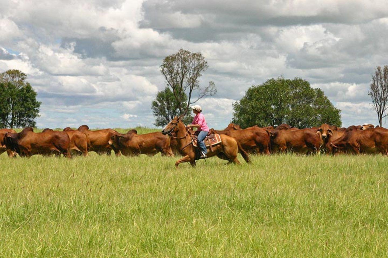 Jillaroos - Cowgirls im australischen Outback