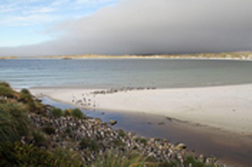 Die Falklandinseln - Rückzug der Pinguine