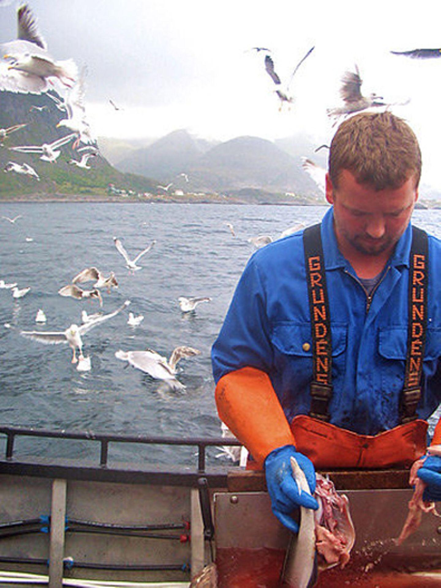 Norwegen: Hochseeangeln für Anfänger - Bild 5